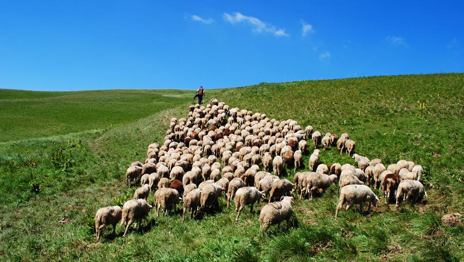How to Care for a Sheep With Pneumonia forecast